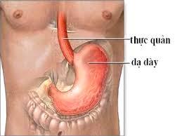 Dấu hiệu rối loạn chức năng dạ dày